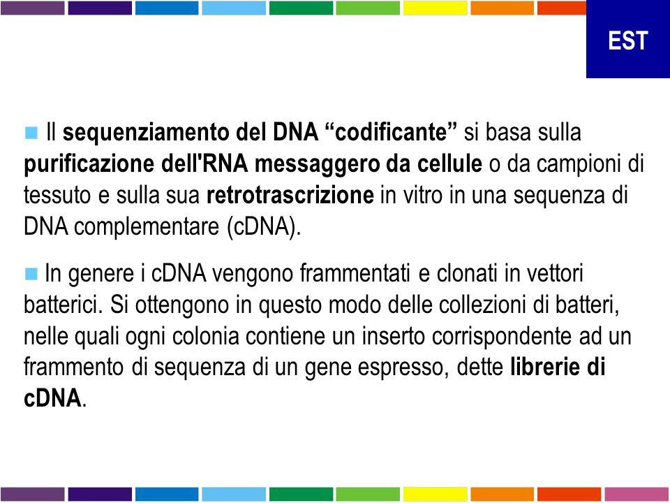 """Il sequenziamento del DNA """"codificante"""" si basa sulla purificazione dell'RNA messaggero da cellule o da campioni di tessuto e sulla sua retrotrascrizi"""