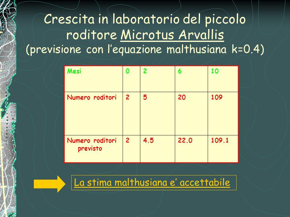 Crescita in laboratorio del piccolo roditore Microtus Arvallis (previsione con l'equazione malthusiana k=0.4) La stima malthusiana e' accettabile Mesi