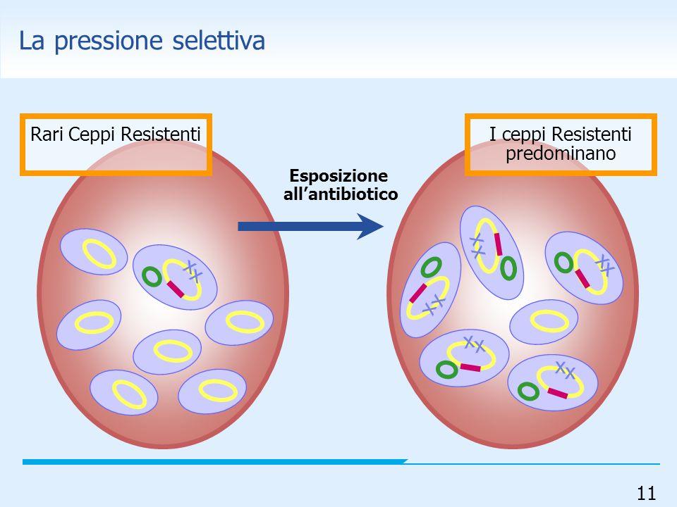 11 x x x x x x x x x x x x Rari Ceppi ResistentiI ceppi Resistenti predominano Esposizione all'antibiotico La pressione selettiva