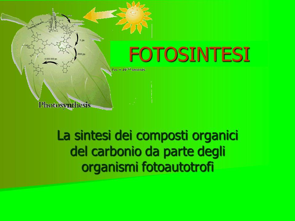 La sintesi dei composti organici del carbonio da parte degli organismi fotoautotrofi FOTOSINTESI