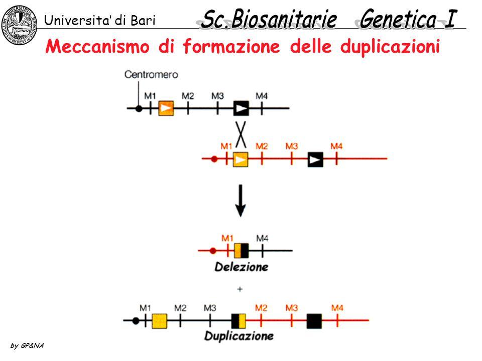 Universita' di Bari by GP&NA Meccanismo di formazione delle duplicazioni