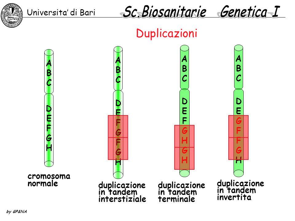 Duplicazioni Universita' di Bari by GP&NA cromosoma normale ABCABC DEFGFGHDEFGFGH ABCABC DEFGHGHDEFGHGH ABCABC DEFGHDEFGH ABCABC DEGFFGHDEGFFGH duplic