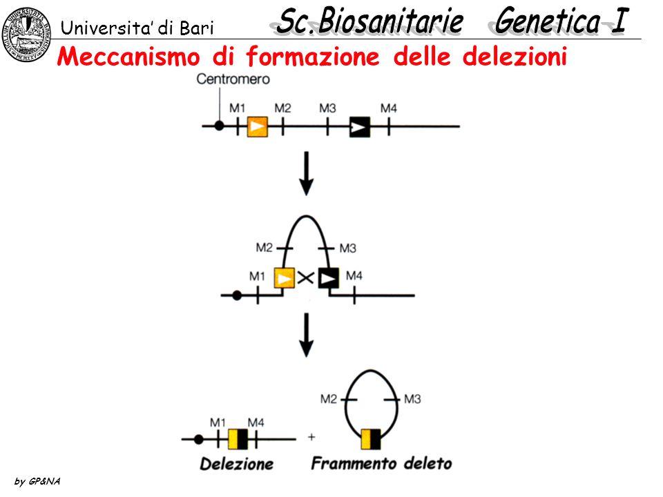 Meccanismo di formazione delle delezioni Universita' di Bari by GP&NA