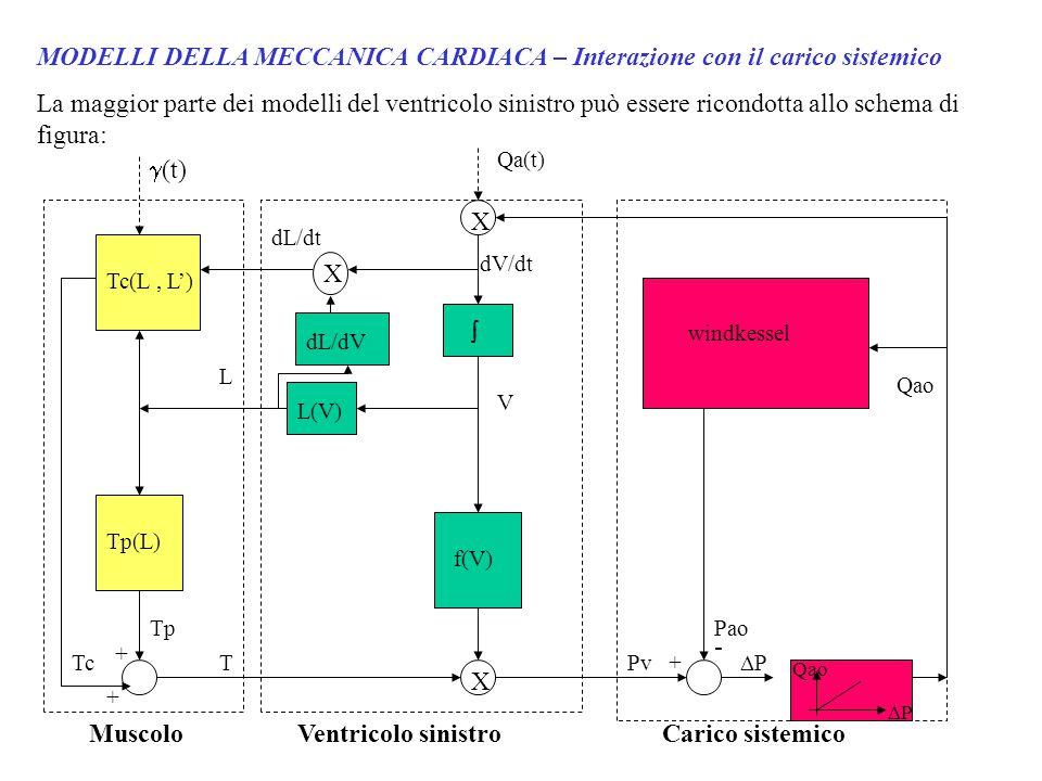 MODELLI DELLA MECCANICA CARDIACA – Interazione con il carico sistemico La maggior parte dei modelli del ventricolo sinistro può essere ricondotta allo schema di figura: Qa(t)  (t) Tc(L, L') Tp(L) Tc Tp + + T L Muscolo  X X X dV/dt V f(V) dL/dt dL/dV L(V) Ventricolo sinistro Pv + Pao - windkessel Qao PP Carico sistemico PP Qao