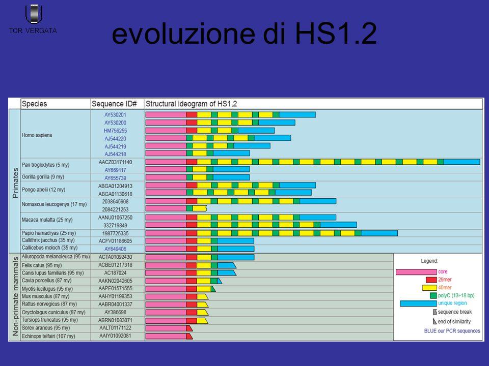 evoluzione di HS1.2 TOR VERGATA