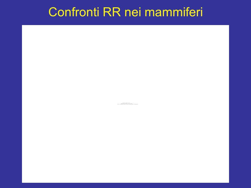 Confronti RR nei mammiferi