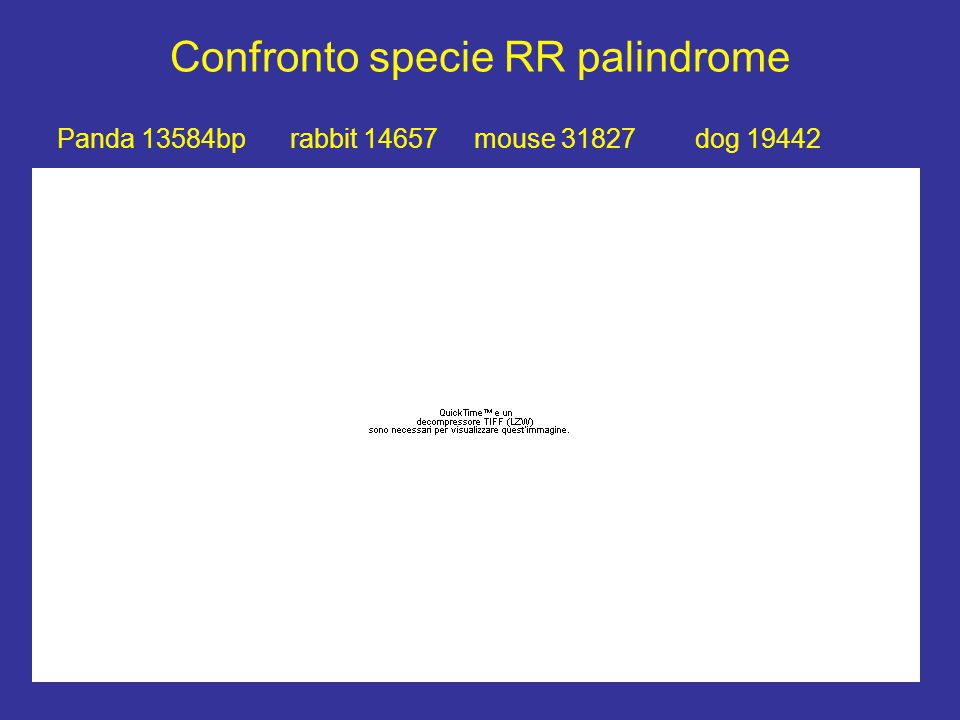 Confronto specie RR palindrome Panda 13584bp rabbit 14657 mouse 31827 dog 19442