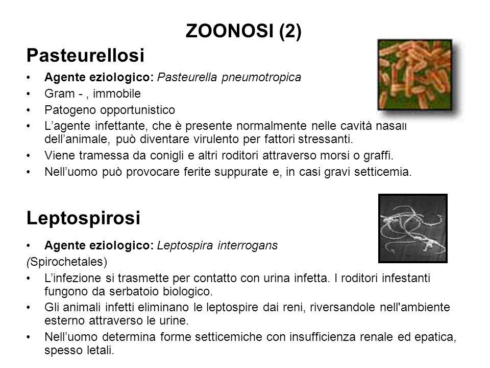 Pasteurellosi Agente eziologico: Pasteurella pneumotropica Gram -, immobile Patogeno opportunistico L'agente infettante, che è presente normalmente ne