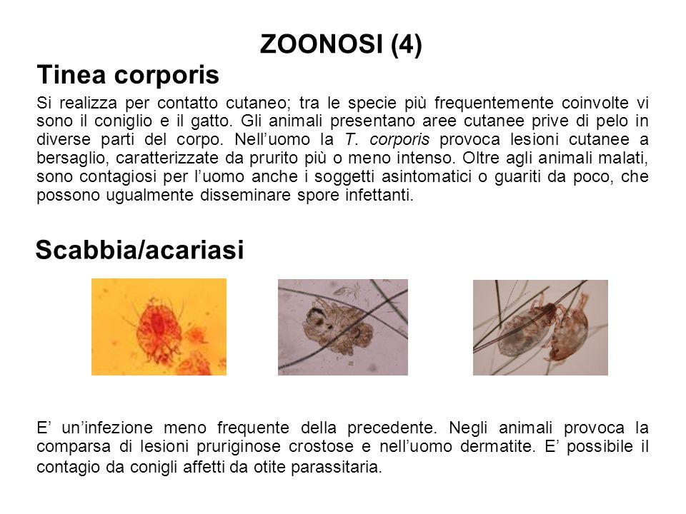 Tinea corporis Si realizza per contatto cutaneo; tra le specie più frequentemente coinvolte vi sono il coniglio e il gatto. Gli animali presentano are