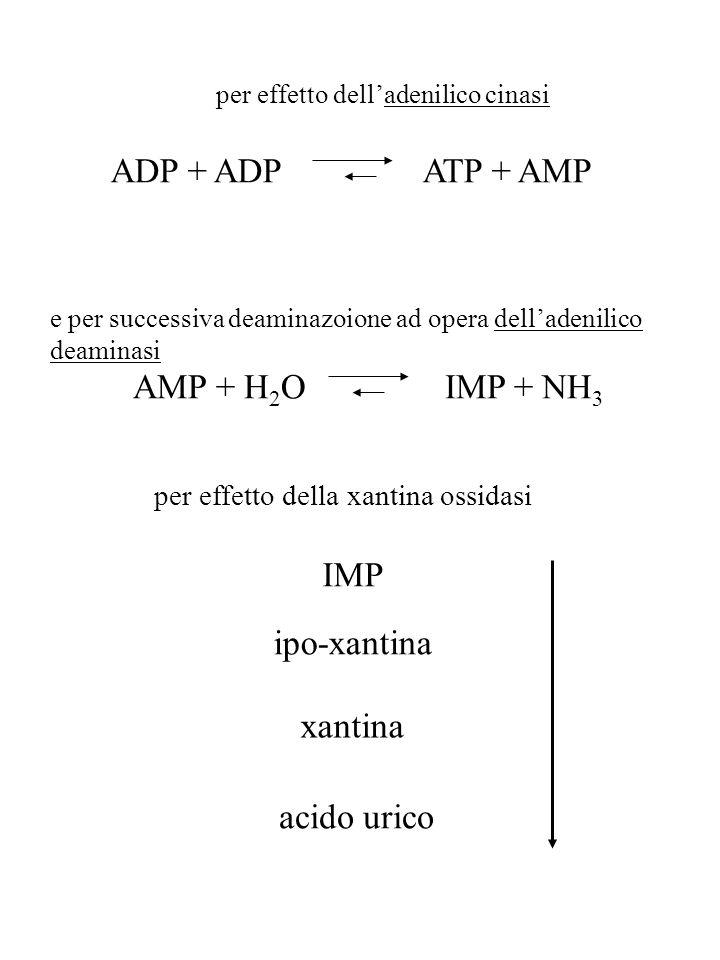 ADP + ADPATP + AMP per effetto dell'adenilico cinasi AMP + H 2 OIMP + NH 3 e per successiva deaminazoione ad opera dell'adenilico deaminasi per effett