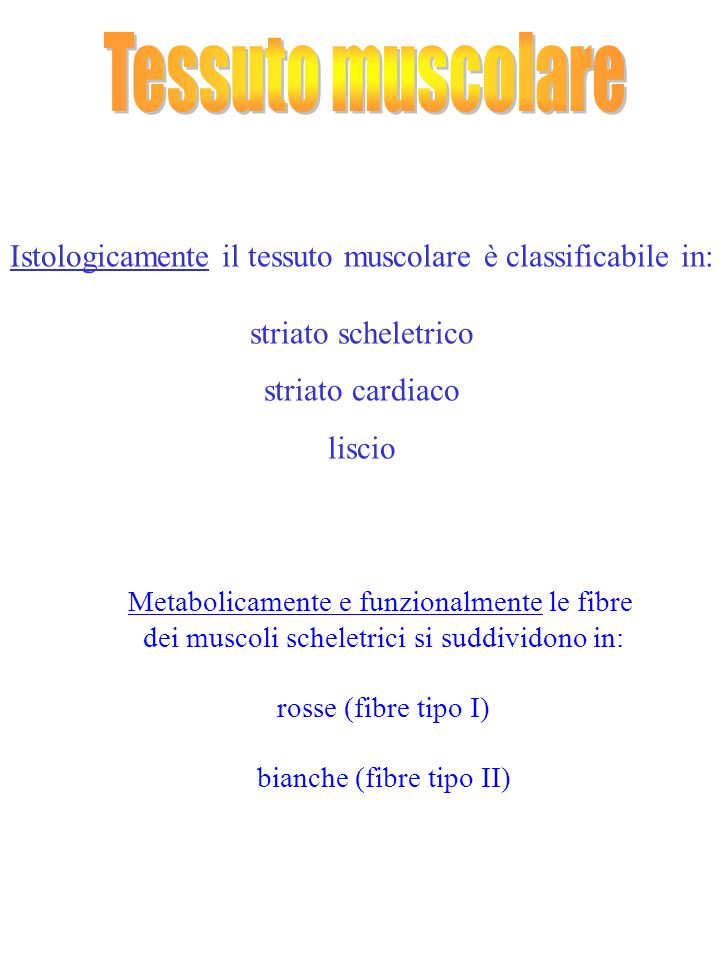 Istologicamente il tessuto muscolare è classificabile in: striato scheletrico striato cardiaco liscio Metabolicamente e funzionalmente le fibre dei mu