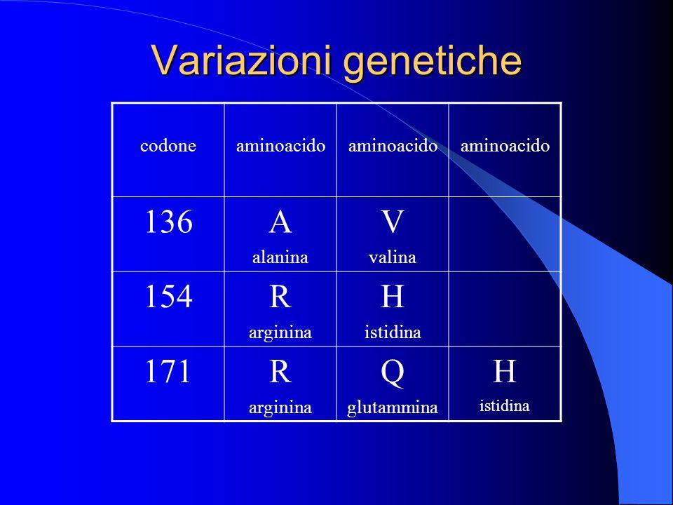 Variazioni genetiche codoneaminoacido 136A alanina V valina 154R arginina H istidina 171R arginina Q glutammina H istidina
