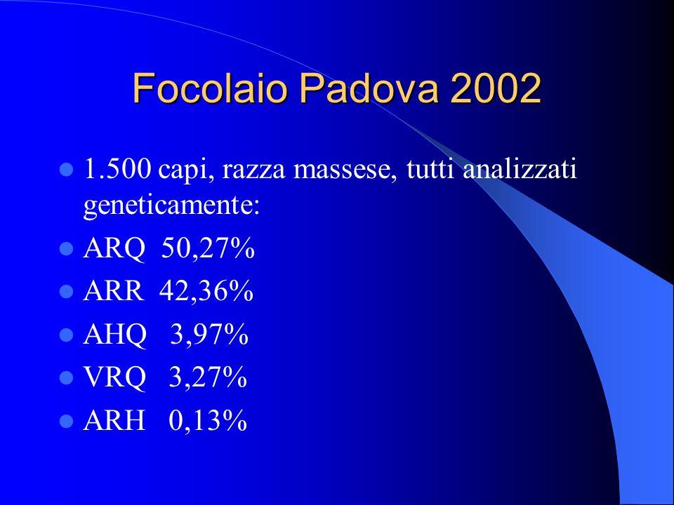 Focolaio Padova 2002 1.500 capi, razza massese, tutti analizzati geneticamente: ARQ 50,27% ARR 42,36% AHQ 3,97% VRQ 3,27% ARH 0,13%