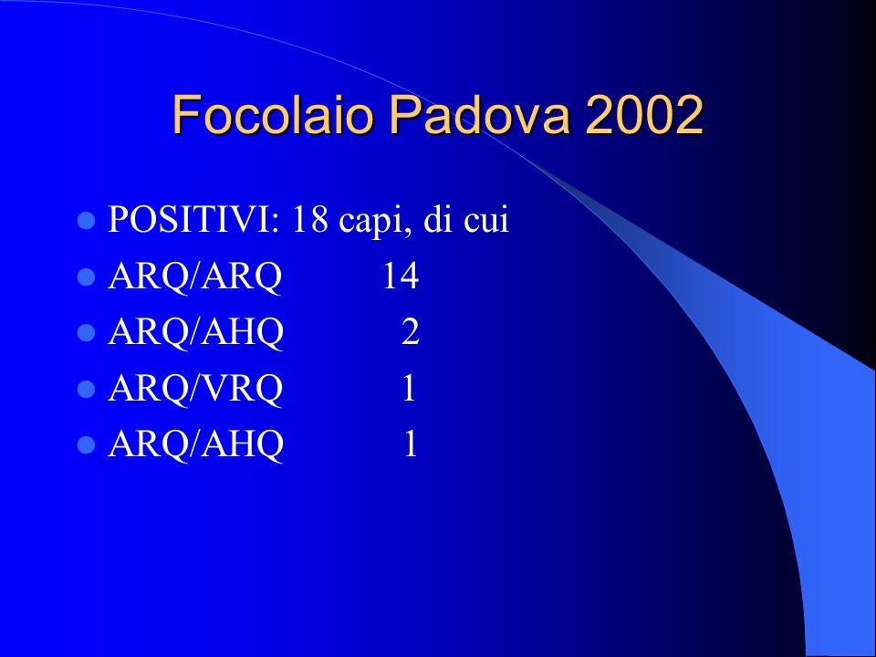 Focolaio Padova 2002 POSITIVI: 18 capi, di cui ARQ/ARQ 14 ARQ/AHQ 2 ARQ/VRQ 1 ARQ/AHQ 1