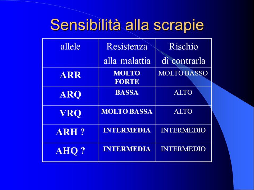 Sensibilità alla scrapie alleleResistenza alla malattia Rischio di contrarla ARR MOLTO FORTE MOLTO BASSO ARQ BASSAALTO VRQ MOLTO BASSAALTO ARH .
