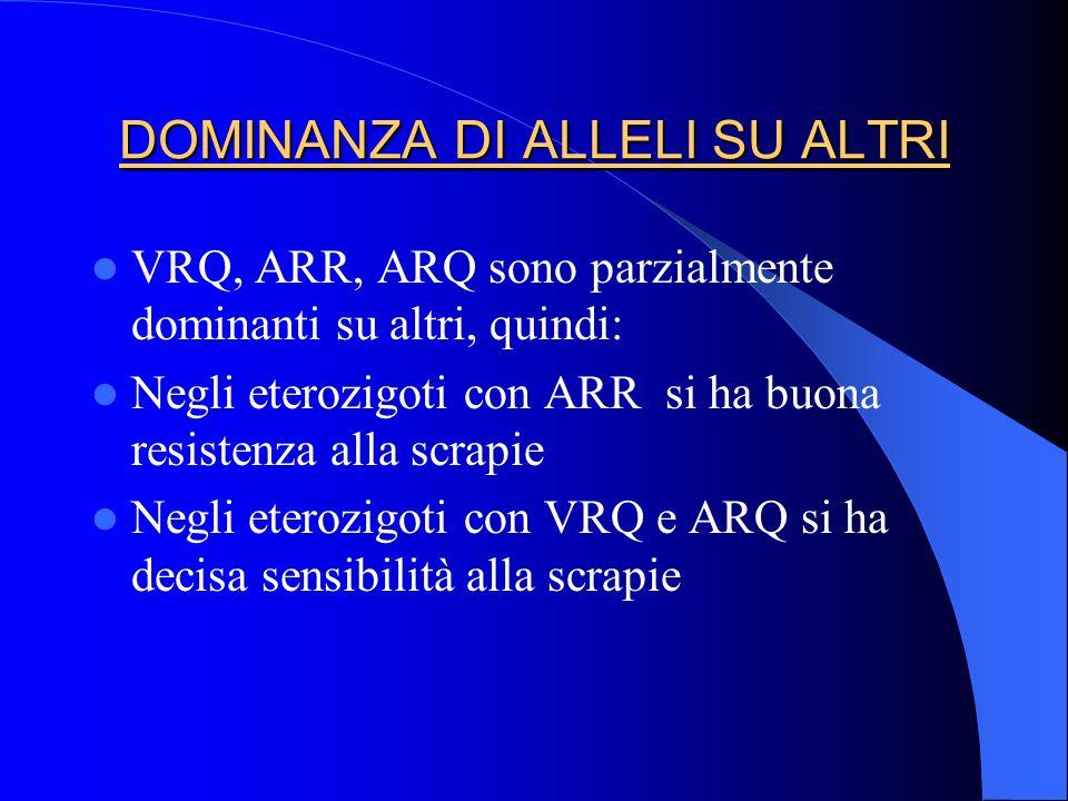 DOMINANZA DI ALLELI SU ALTRI VRQ, ARR, ARQ sono parzialmente dominanti su altri, quindi: Negli eterozigoti con ARR si ha buona resistenza alla scrapie Negli eterozigoti con VRQ e ARQ si ha decisa sensibilità alla scrapie