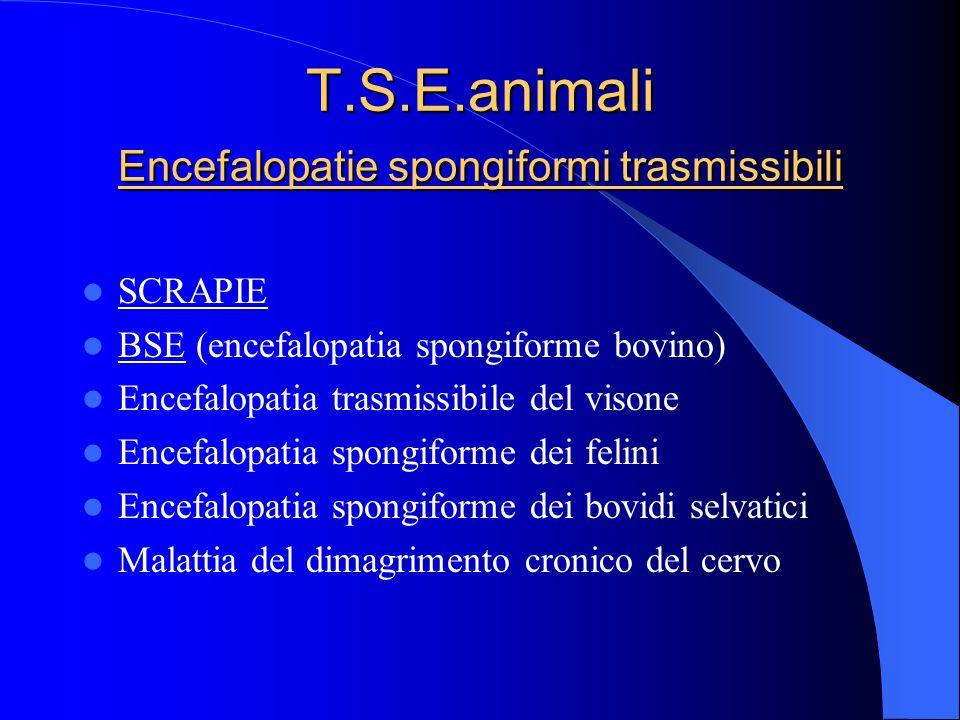 T.S.E.