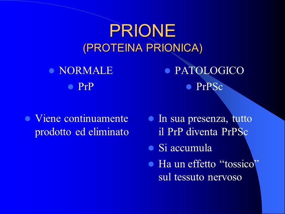 PRIONE (PROTEINA PRIONICA) NORMALE PrP Viene continuamente prodotto ed eliminato PATOLOGICO PrPSc In sua presenza, tutto il PrP diventa PrPSc Si accumula Ha un effetto tossico sul tessuto nervoso