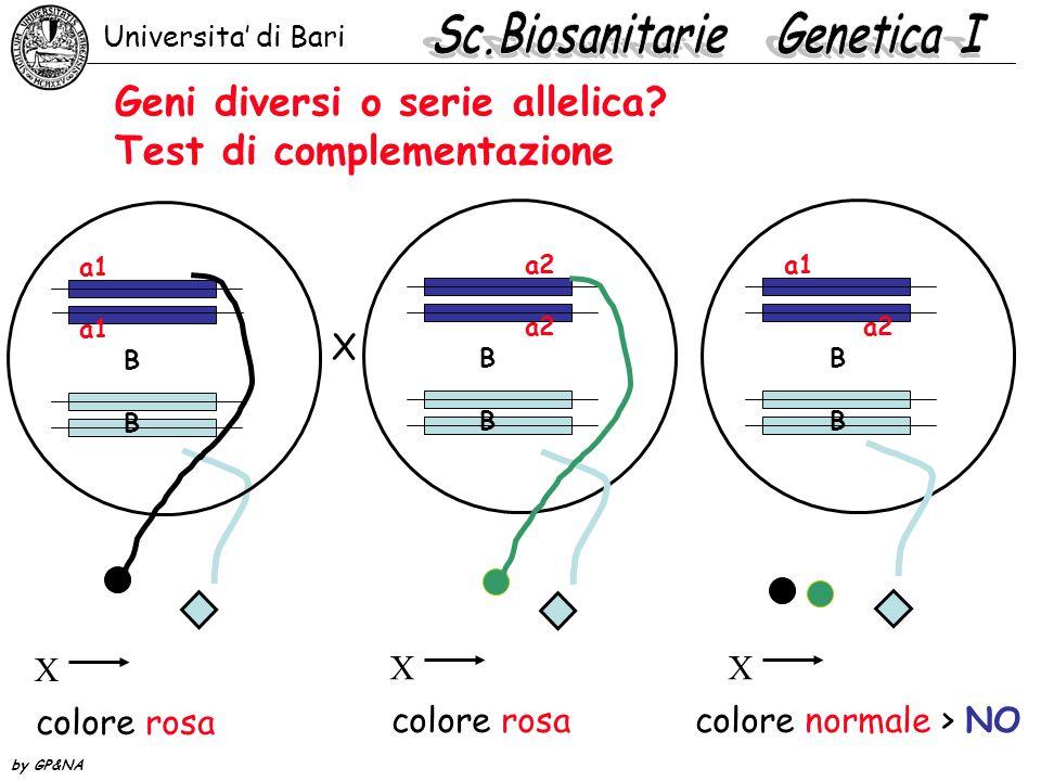 Geni diversi o serie allelica? Test di complementazione a1 B X colore rosa a2 B X colore rosa a1 a2 B X colore normale > NO X Universita' di Bari by G
