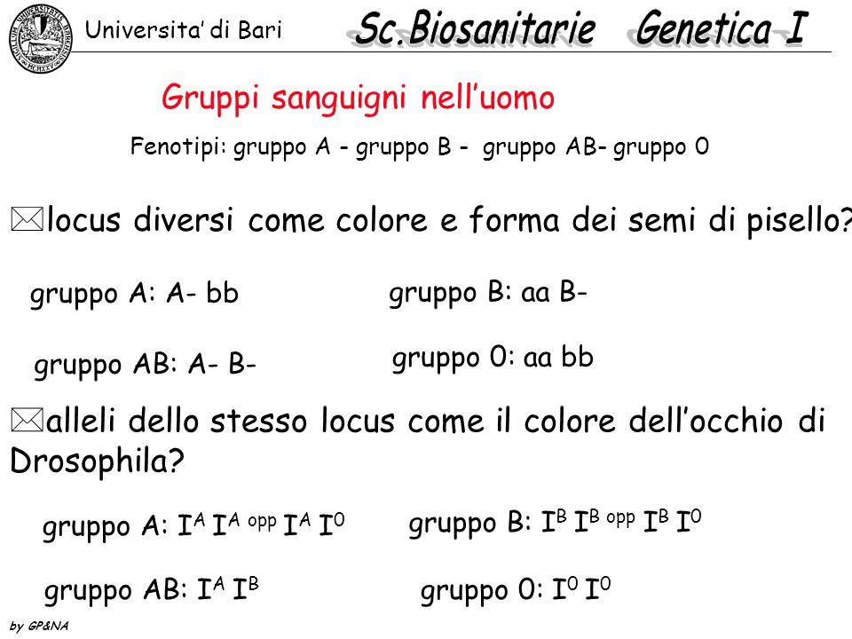Fenotipi: gruppo A - gruppo B - gruppo AB- gruppo 0 *locus diversi come colore e forma dei semi di pisello? *alleli dello stesso locus come il colore