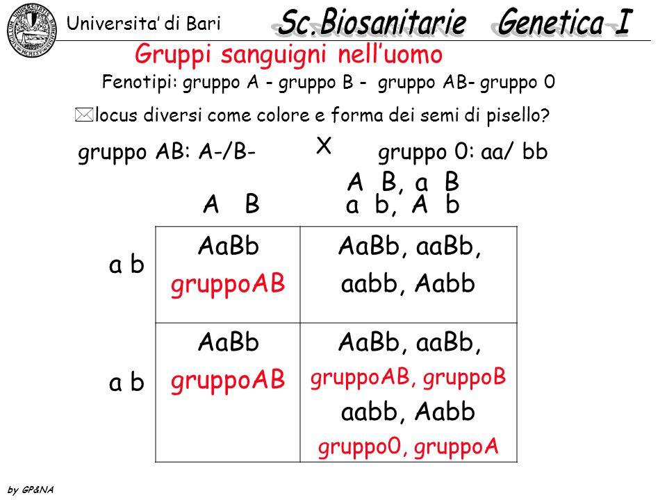 Gruppi sanguigni nell'uomo Fenotipi: gruppo A - gruppo B - gruppo AB- gruppo 0 *locus diversi come colore e forma dei semi di pisello? gruppo AB: A-/B