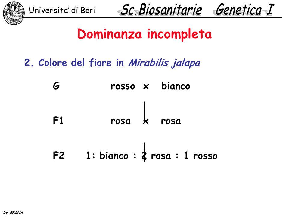 Fenotipi: gruppo A - gruppo B - gruppo AB- gruppo 0 *locus diversi come colore e forma dei semi di pisello.