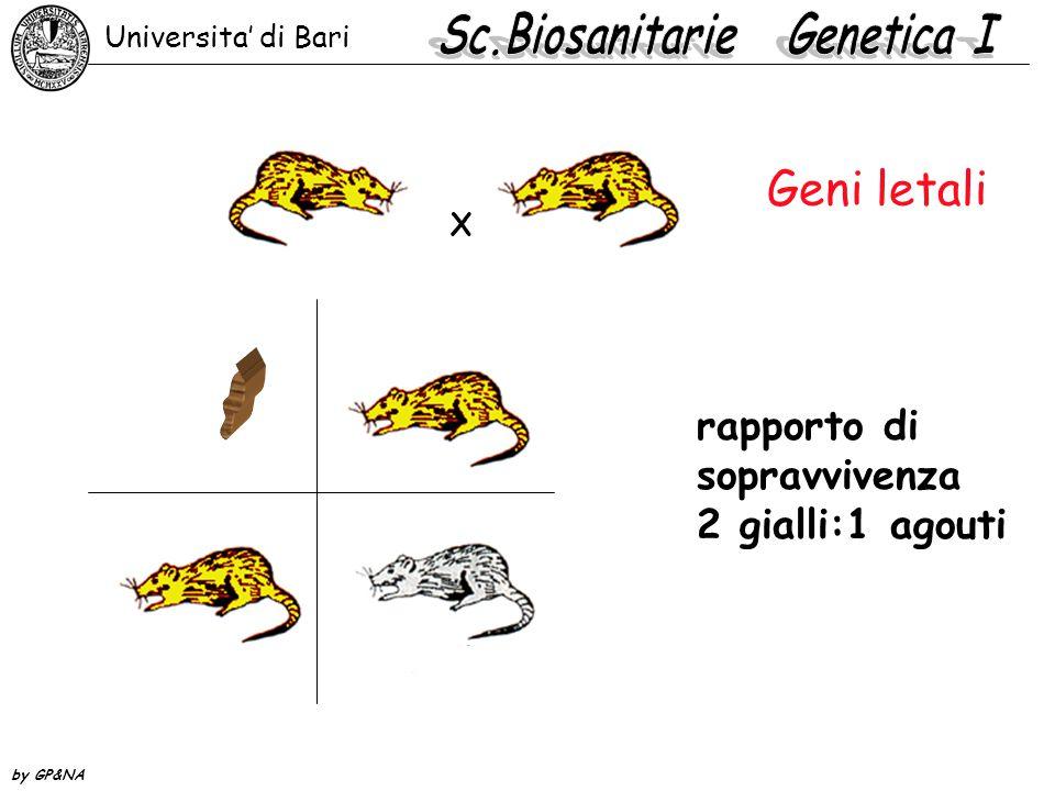 Geni letali rapporto di sopravvivenza 2 gialli:1 agouti Universita' di Bari by GP&NA X