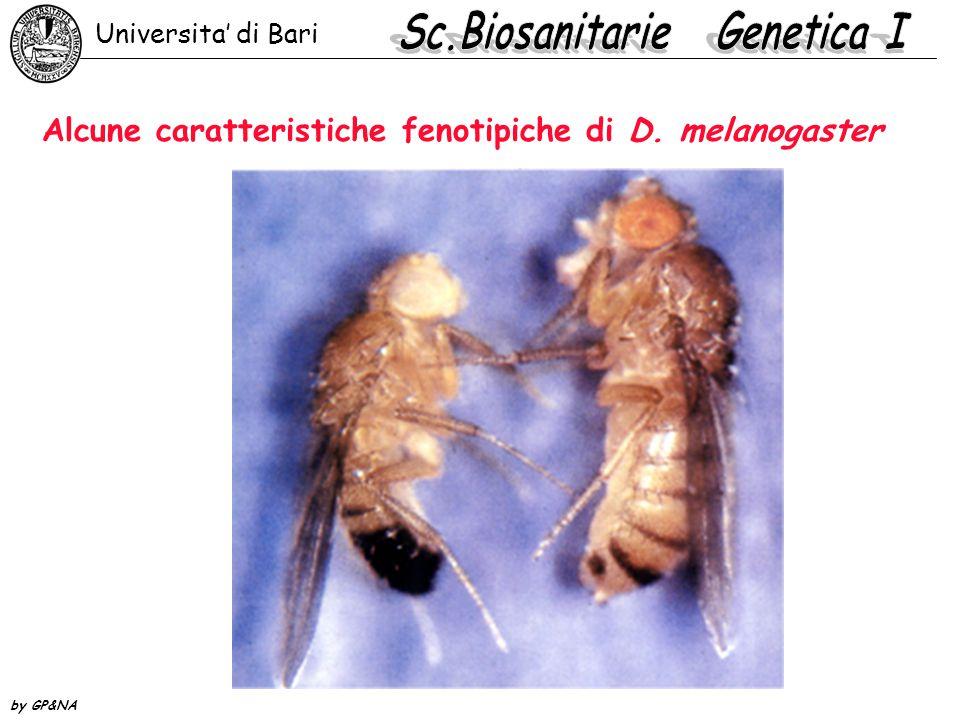 Alcune caratteristiche fenotipiche di D. melanogaster Universita' di Bari by GP&NA
