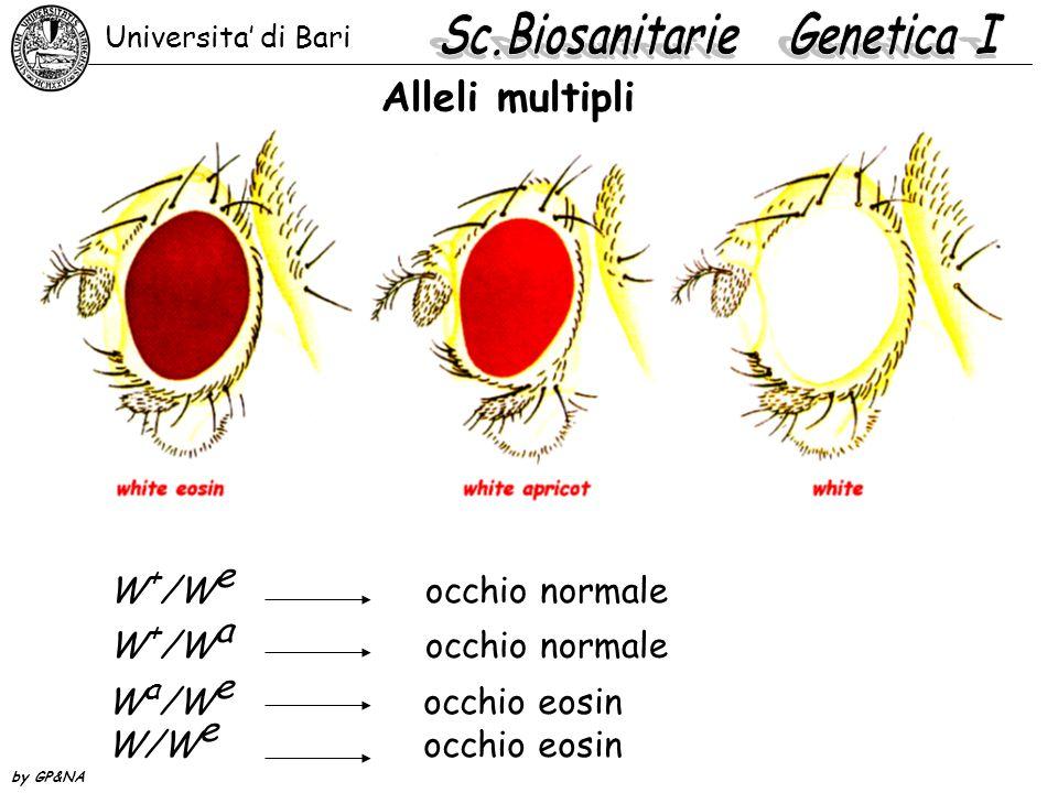 Serie allelica del gene white genotipi e fenotipo mutantepigmento w/wwhite0,0044 w t /w t tinged0,0062 w a /w a apricot0,0197 w bl /w bl blood0,0310 w e /w e eosin0,0324 w ch /w ch cherry0,0410 w a3 /w a3 apricot-30,0632 w w /w w wine0,0650 w co /w co coral0,0798 w sat /w sat satsuma0,1404 w col /w col colored0,1636 Universita' di Bari by GP&NA