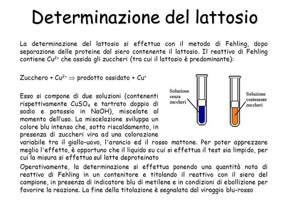 Determinazione del lattosio La determinazione del lattosio si effettua con il metodo di Fehling, dopo separazione delle proteine dal siero contenente il lattosio.