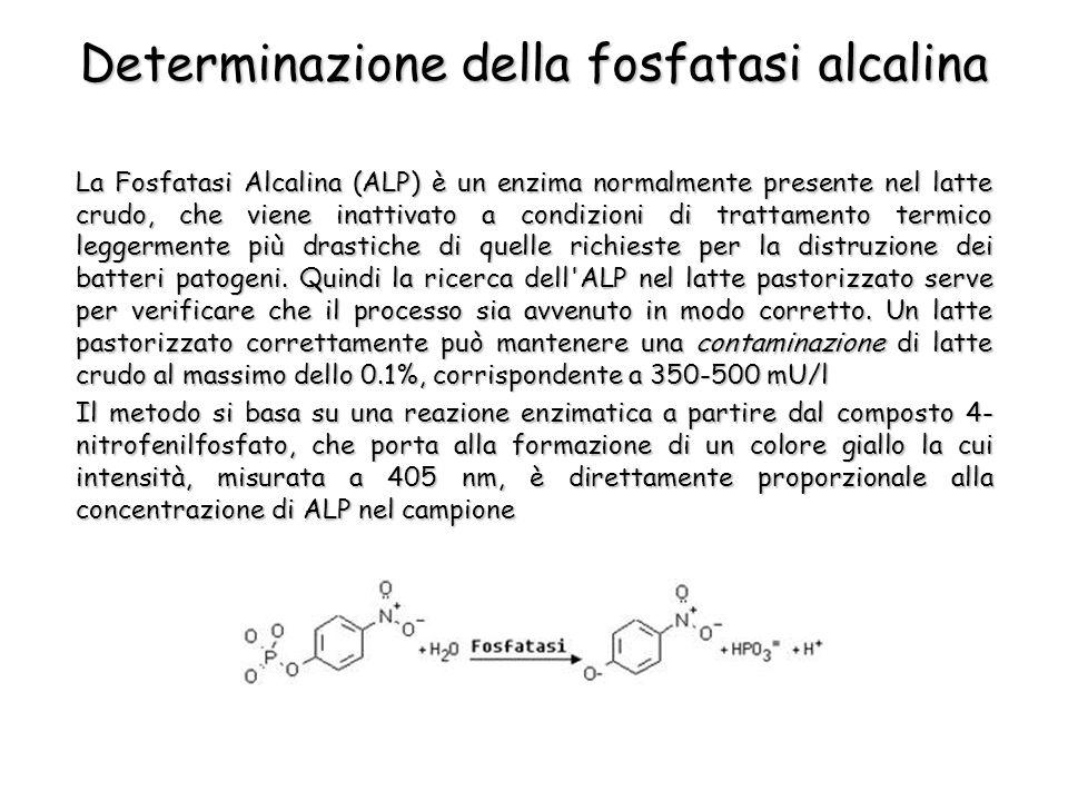 Determinazione della fosfatasi alcalina La Fosfatasi Alcalina (ALP) è un enzima normalmente presente nel latte crudo, che viene inattivato a condizioni di trattamento termico leggermente più drastiche di quelle richieste per la distruzione dei batteri patogeni.
