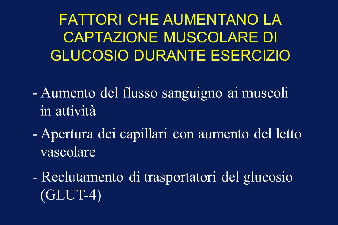FATTORI CHE AUMENTANO LA CAPTAZIONE MUSCOLARE DI GLUCOSIO DURANTE ESERCIZIO - Aumento del flusso sanguigno ai muscoli in attività - Apertura dei capil