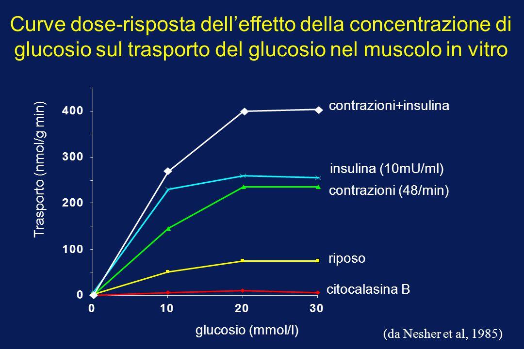 Trasporto (nmol/g min) glucosio (mmol/l) riposo Curve dose-risposta dell'effetto della concentrazione di glucosio sul trasporto del glucosio nel musco