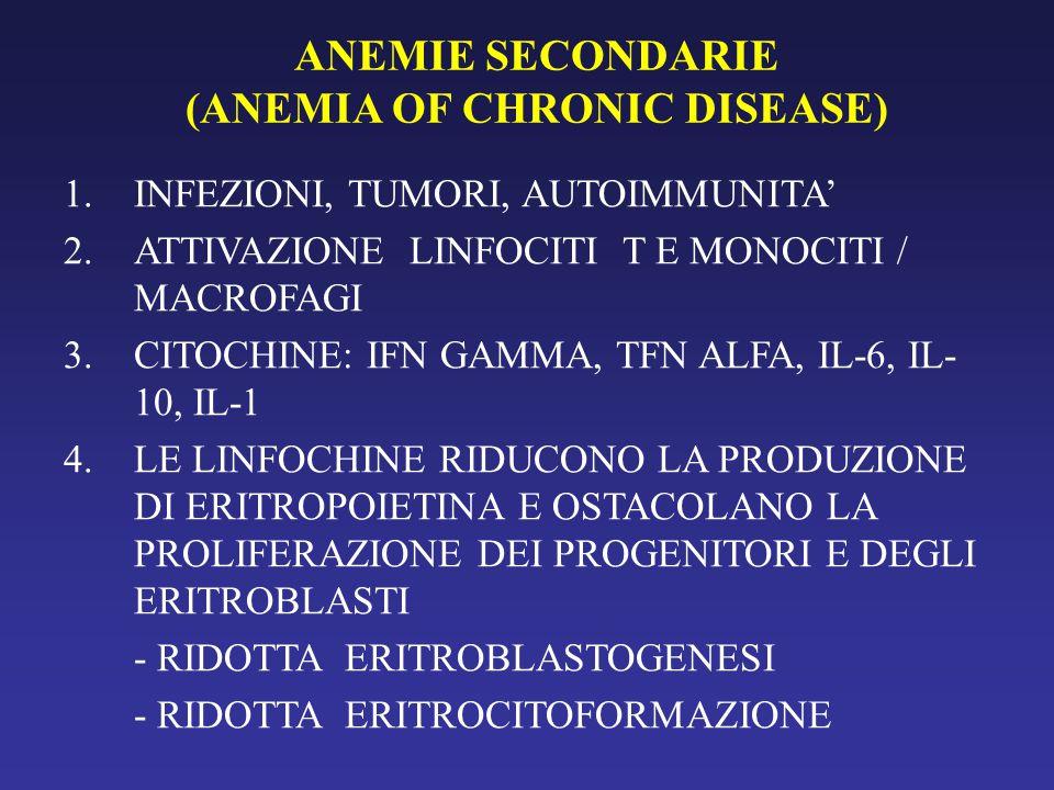ANEMIE SECONDARIE (ANEMIA OF CHRONIC DISEASE) 1.INFEZIONI, TUMORI, AUTOIMMUNITA' 2.ATTIVAZIONE LINFOCITI T E MONOCITI / MACROFAGI 3.CITOCHINE: IFN GAMMA, TFN ALFA, IL-6, IL- 10, IL-1 4.LE LINFOCHINE RIDUCONO LA PRODUZIONE DI ERITROPOIETINA E OSTACOLANO LA PROLIFERAZIONE DEI PROGENITORI E DEGLI ERITROBLASTI - RIDOTTA ERITROBLASTOGENESI - RIDOTTA ERITROCITOFORMAZIONE