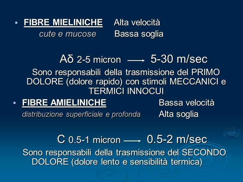  FIBRE MIELINICHE Alta velocità cute e mucose Bassa soglia Aδ 2-5 micron 5-30 m/sec Sono responsabili della trasmissione del PRIMO DOLORE (dolore rap