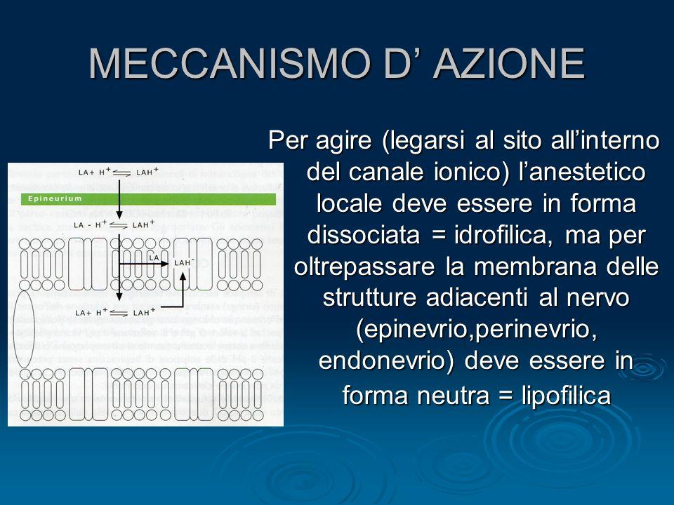 MECCANISMO D' AZIONE Per agire (legarsi al sito all'interno del canale ionico) l'anestetico locale deve essere in forma dissociata = idrofilica, ma pe