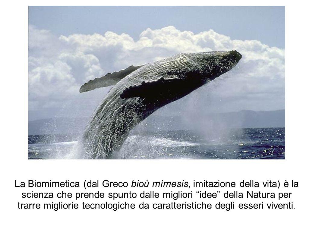 """La Biomimetica (dal Greco bioù mìmesis, imitazione della vita) è la scienza che prende spunto dalle migliori """"idee"""" della Natura per trarre migliorie"""