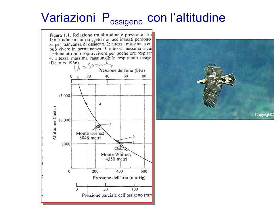Variazioni P ossigeno con l'altitudine