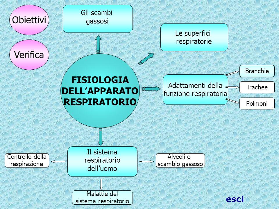 Controllo della respirazione Adattamenti della funzione respiratoria FISIOLOGIA DELL'APPARATO RESPIRATORIO Trachee Polmoni Branchie Il sistema respira
