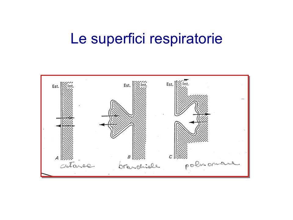 Le superfici respiratorie