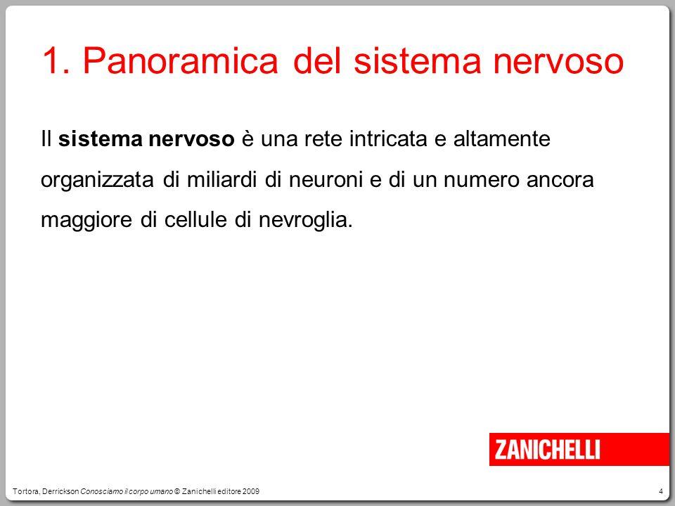4 1. Panoramica del sistema nervoso Il sistema nervoso è una rete intricata e altamente organizzata di miliardi di neuroni e di un numero ancora maggi