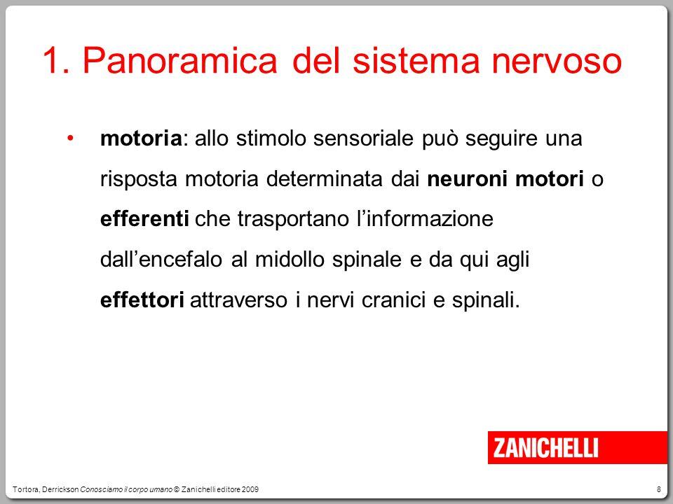 8 motoria: allo stimolo sensoriale può seguire una risposta motoria determinata dai neuroni motori o efferenti che trasportano l'informazione dall'encefalo al midollo spinale e da qui agli effettori attraverso i nervi cranici e spinali.