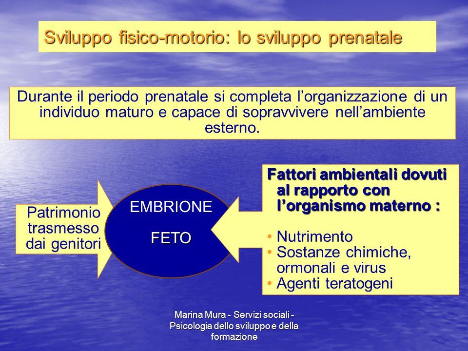 Marina Mura - Servizi sociali - Psicologia dello sviluppo e della formazione Durante il periodo prenatale si completa l'organizzazione di un individuo