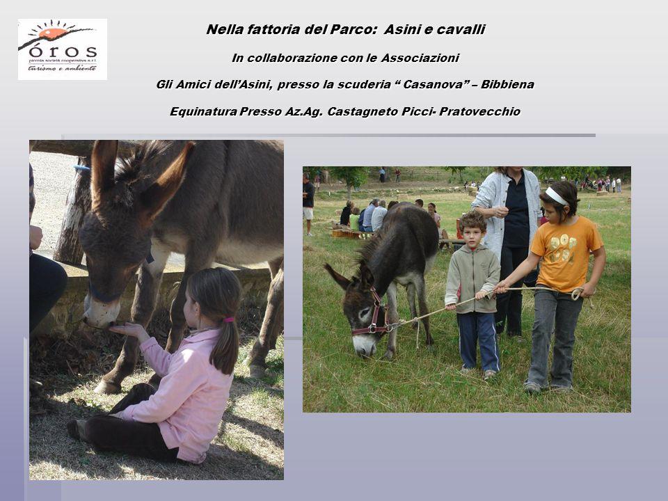 """Nella fattoria del Parco: Asini e cavalli In collaborazione con le Associazioni Gli Amici dell'Asini, presso la scuderia """" Casanova"""" – Bibbiena Equina"""