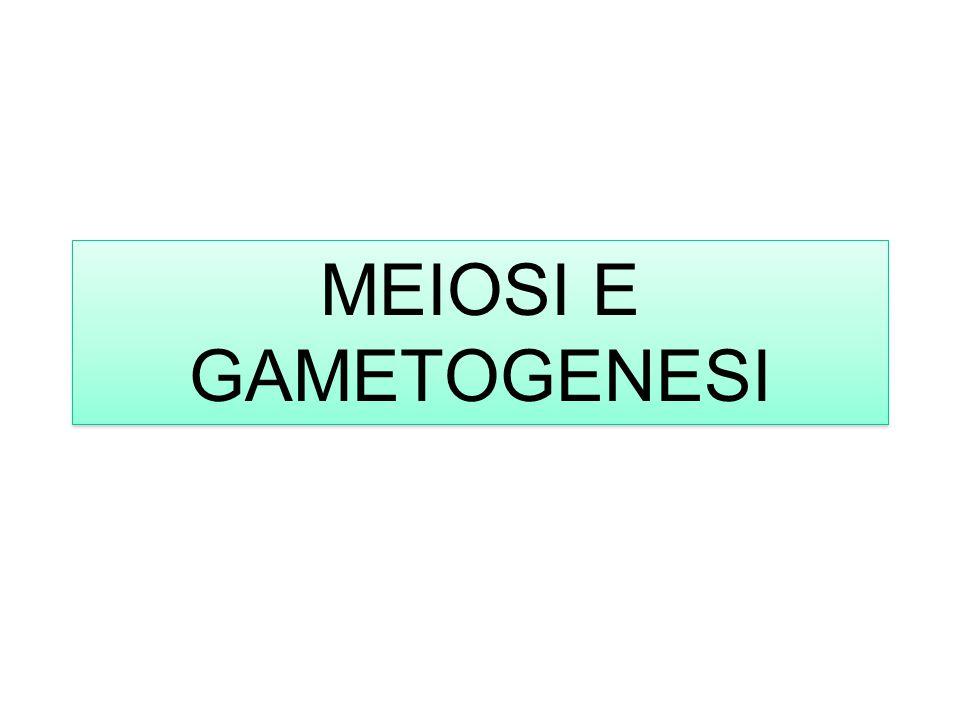 MEIOSI E GAMETOGENESI