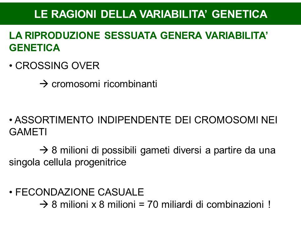 LE RAGIONI DELLA VARIABILITA' GENETICA LA RIPRODUZIONE SESSUATA GENERA VARIABILITA' GENETICA CROSSING OVER  cromosomi ricombinanti ASSORTIMENTO INDIPENDENTE DEI CROMOSOMI NEI GAMETI  8 milioni di possibili gameti diversi a partire da una singola cellula progenitrice FECONDAZIONE CASUALE  8 milioni x 8 milioni = 70 miliardi di combinazioni !