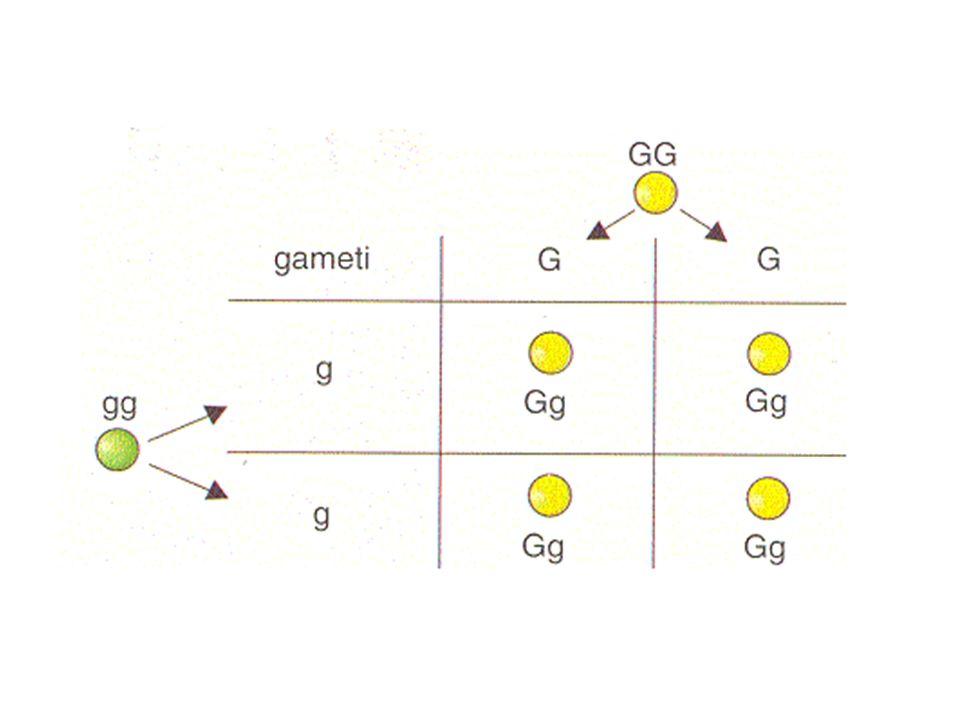 Legge dell'uniformità degli ibridi