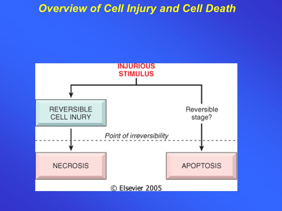 Overview of Cell Injury and Cell Death