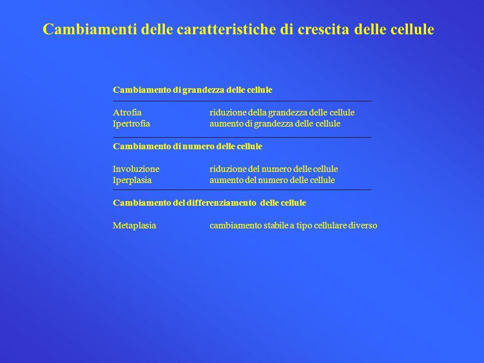 Cambiamenti delle caratteristiche di crescita delle cellule Cambiamento di grandezza delle cellule Atrofiariduzione della grandezza delle cellule Iper