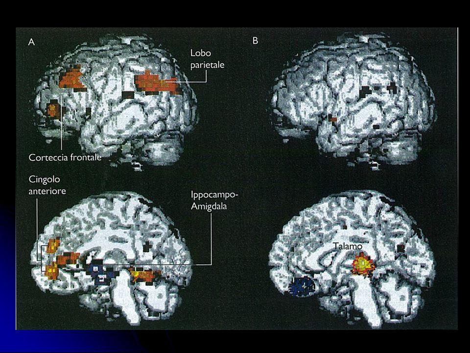 NEUROSCIENZE: campi di studio Lo studio della COSCIENZA Lo studio della COSCIENZA Neuroscienze COGNITIVE: lo studio del PENSIERO e Teorie della MENTE Neuroscienze COGNITIVE: lo studio del PENSIERO e Teorie della MENTE
